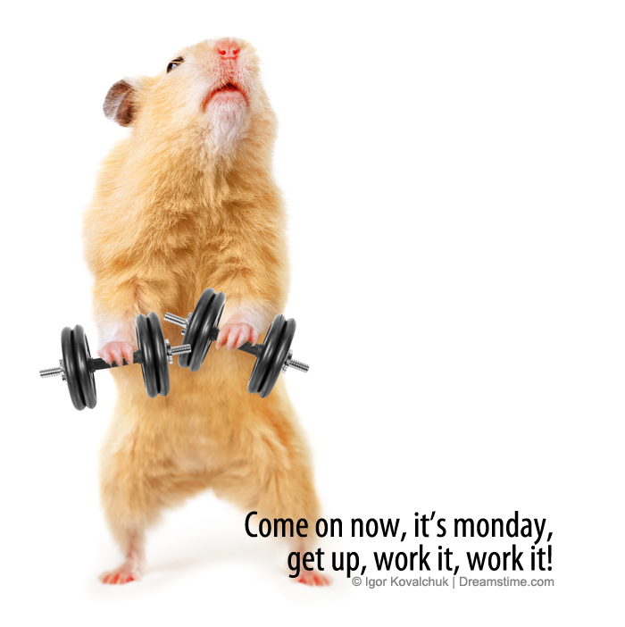 Funny Monday Work Meme : Monday fitness motivation funny imgkid the
